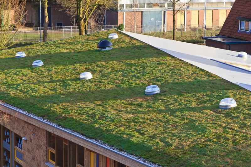 Installation sur toiture végétalisée
